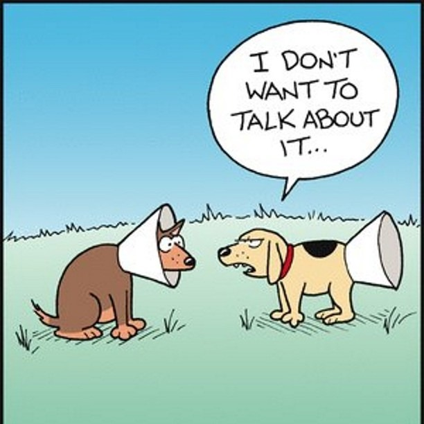 dog-humor cone of shame